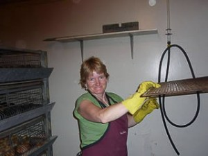 Donna in brooder room cleaning