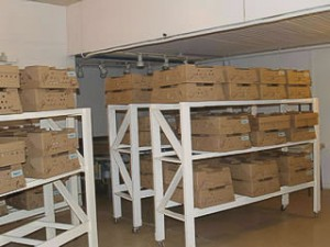 Rack room where birds are boxed and waiting for trucks to deliver to agents